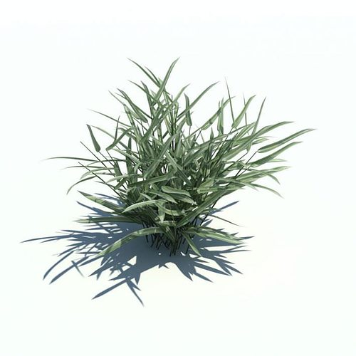phalaris arundinacea plant 3d model obj mtl 1