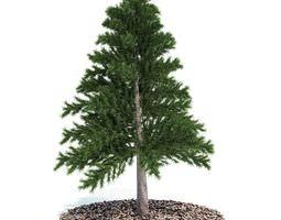 decorative miniature tabletop evergreen pine tree 3d model