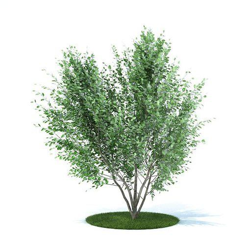 green leafy plant 3d model obj mtl 1
