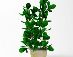 3D model Potted Green Plant