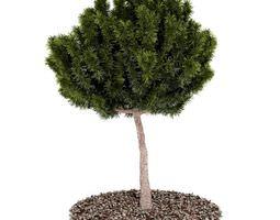 3D Tree Bonzai Tree