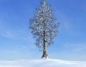 Winter White Tree 3D