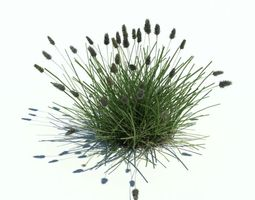 3d bushy grass plant casting shadows
