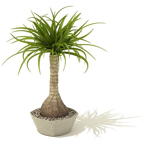 indoor palm tree d model, Natural flower