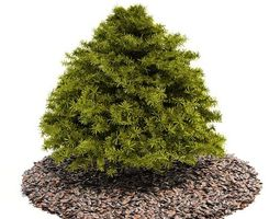 pine tree on top of a bed or layout of cedar mulch 3d model