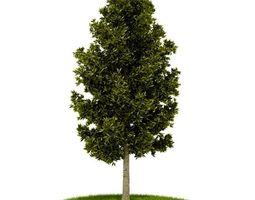 bark Green Leaved Tree 3D