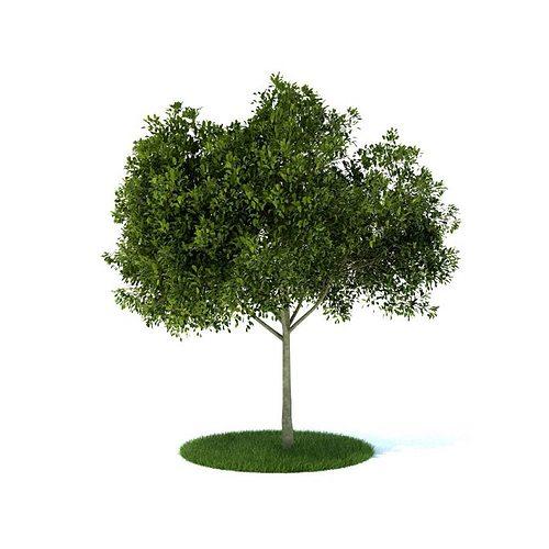 small leafy tree 3d model obj mtl 1