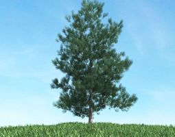 Green Pine Tree 3D