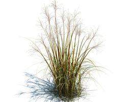 3D model Tall Grass For Landscape
