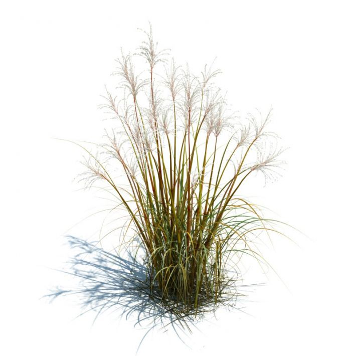 Tall grass for landscape 3d model obj dwg for Long ornamental grass