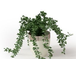 3D Potted House Plant