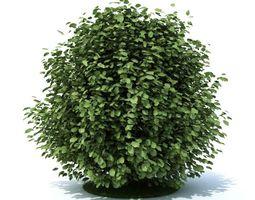 3d model green leaf shrub