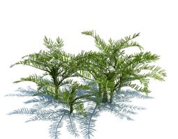 green plants   ferns 3d model obj