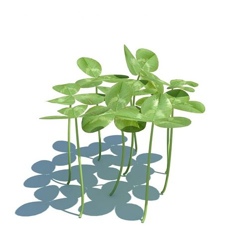 3d Model Three Leaf Clovers Cgtrader