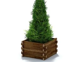 3d evergreen shrub in weathered lumber planter