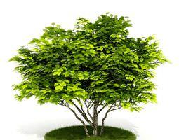green leaf tree 3d model