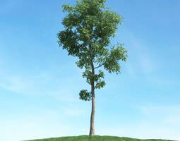 green tall tree 3d model
