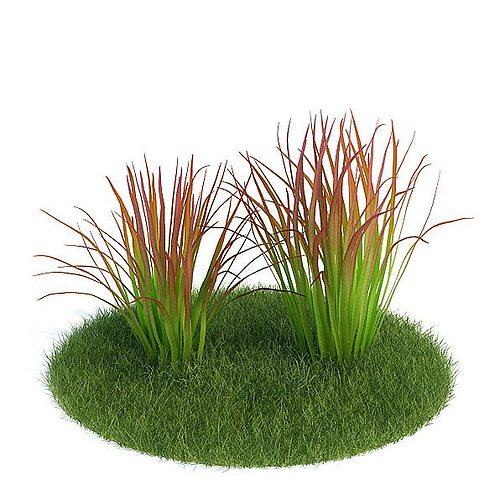 tall green grass 3d model  1