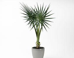 3d model star leaf potted fern
