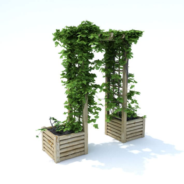 Pergola Arbor Arch Greenery Outdoors Wooden