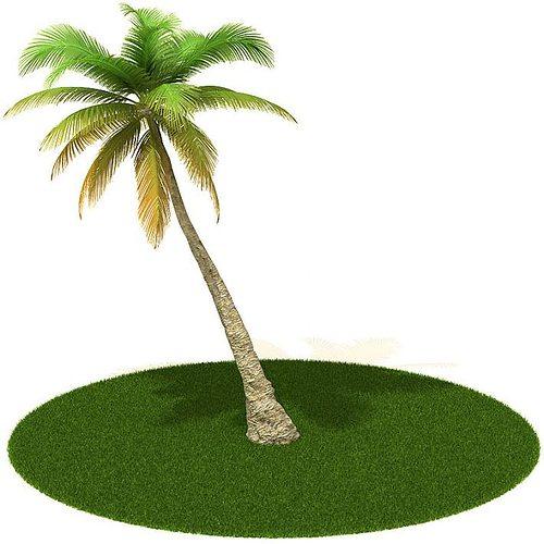 palm tree 3d model obj mtl 1