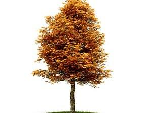 3D Orange Leafy Tree