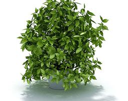 Green Leafy Potted Shrub 3D