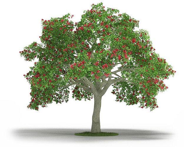 green leafy erythrina 3d model obj mtl 1