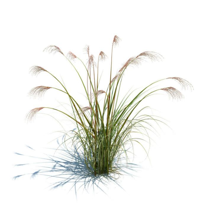 Green tall grass 3d model obj Long grass plants