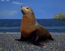 brown fur seal arctocephalus pusillus 3d model