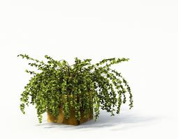 Green Fern Plant With Brown Vase 3D Model