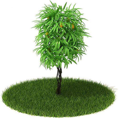 very green leafy tree 3d model obj mtl 1