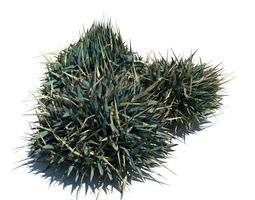 Blue Green Ornamental Grass 3D model