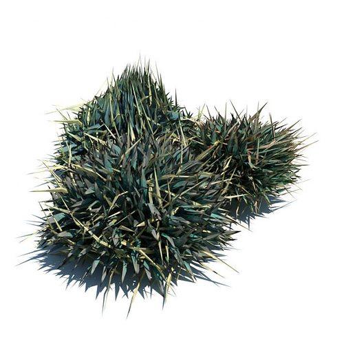 Blue green ornamental grass 3d model obj for Green ornamental grass