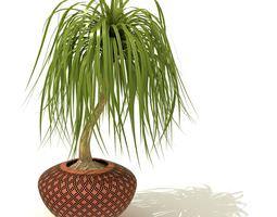 Indoor Decoration Plant 3D model