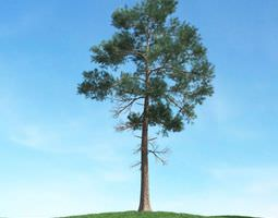 Green Conifer Tree Pine 3D