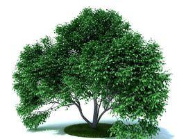 Green Leafy Tree tree 3D