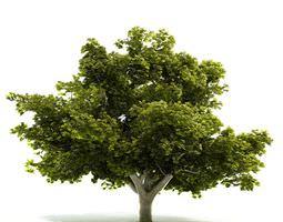 Mature Very Leafy Tree 3D model