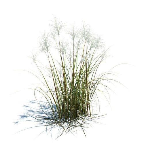 amur silver grass 3d model obj mtl 3dm 1