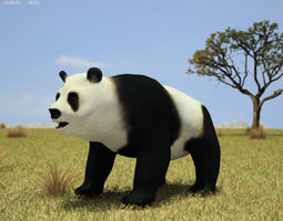 3D asset Giant Panda Ailuropoda Melanoleuca