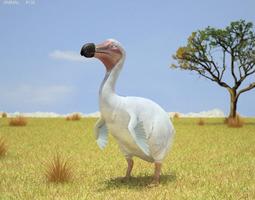 dodo raphus cucullatus game-ready 3d model