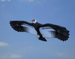andean condor vultur gryphus 3d model max obj 3ds fbx c4d lwo lw lws
