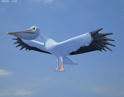 3d model low-poly american white pelican pelecanus erythrorhynchos
