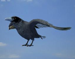 3D model Common Raven Corvus Corax