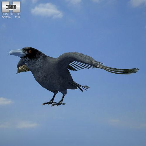 common raven corvus corax 3d model max obj 3ds fbx c4d lwo lw lws 1