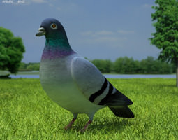 low-poly 3d asset rock dove columba livia