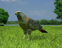 red-shouldered hawk buteo lineatus low-poly 3d asset
