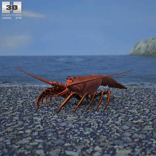 spiny lobster palinuridae 3d model low-poly max obj mtl 3ds fbx c4d lwo lw lws 1