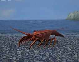spiny lobster palinuridae 3d model max obj 3ds fbx c4d lwo lw lws