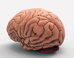the brain 3d model wrl wrz